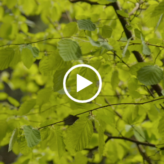 Reset Video - Created specifically for busy people, Reset is designed to help colleagues take control of their emotions, reassign their focus and channel positive energy in to the rest of their day.